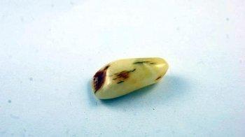 bursztyn bałtycki kaboszon kora wielokolorowy 4,3 g