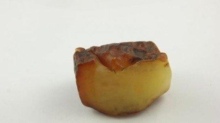 bursztyn bałtycki surowy biały królewski naturalny 62,5 g