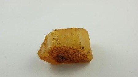 bursztyn bałtycki żółty niemodyfikowany muzealny 33,0 g